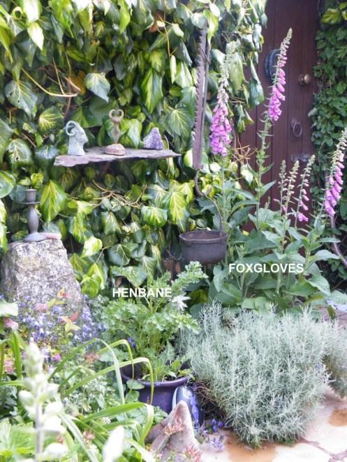 Wild Backyard Herbs : GROWING MAGICAL HERBS  The Cauldron of the Allta Cailleach